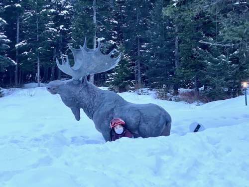 note: NOT A REAL MOOSE