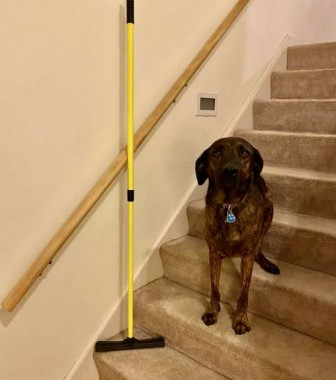 Odin models next to the fur remover broom that keeps my stairs fur-free. This time of year my dogs are walking dust clouds!